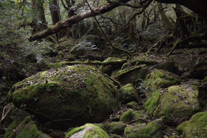 屋久島、日本2