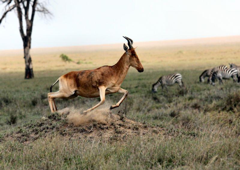 野生公園、タンザニア