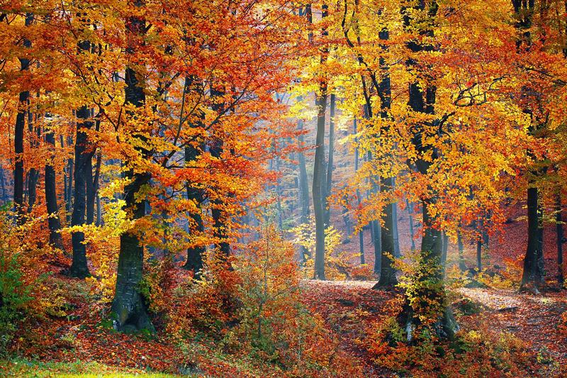 春の美しさも夏のそれも、秋のような気品はもっていない。